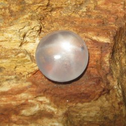 Grey Star Sapphire 1.57 carat