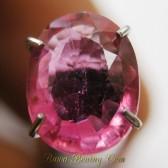 Batu Cincin Permata Ruby Pinky Merah 1.45 carat Asli