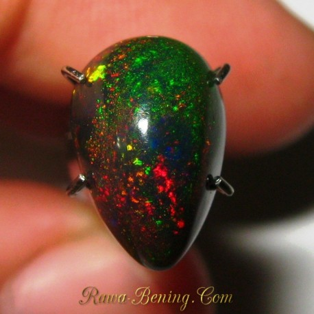 Natural Black Opal Pear Hijau Rintik Merah 1.65 carat